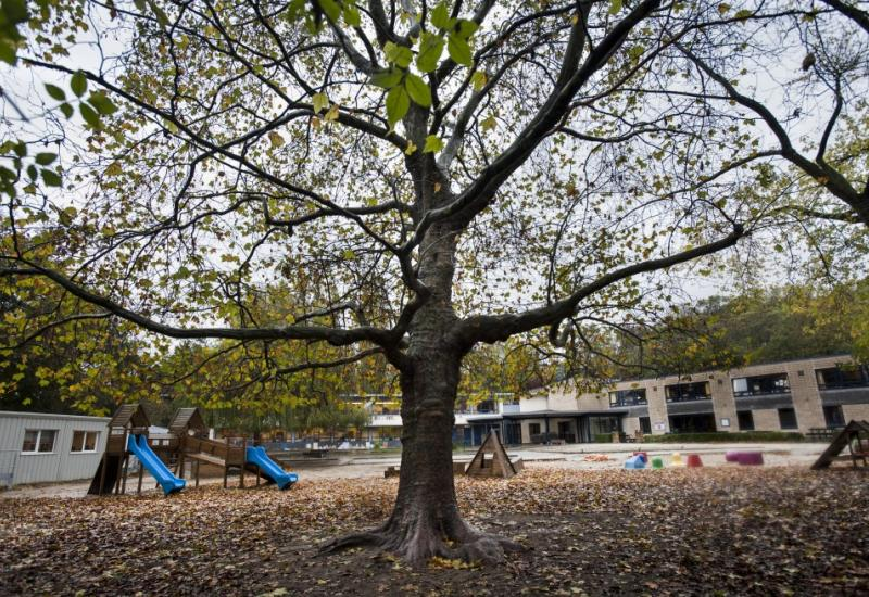 Ecole Arc-en-ciel (Forest)